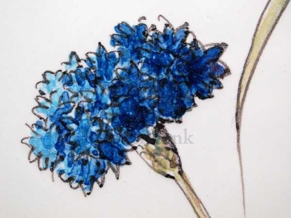 RH20-5 Feldblumen
