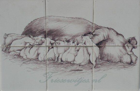 RH6-26 Schwein beim futtern