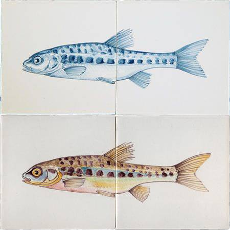 RH2-15d Fisch
