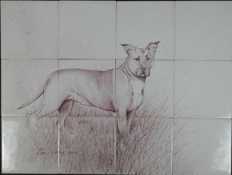 Hund als Studienobjekt