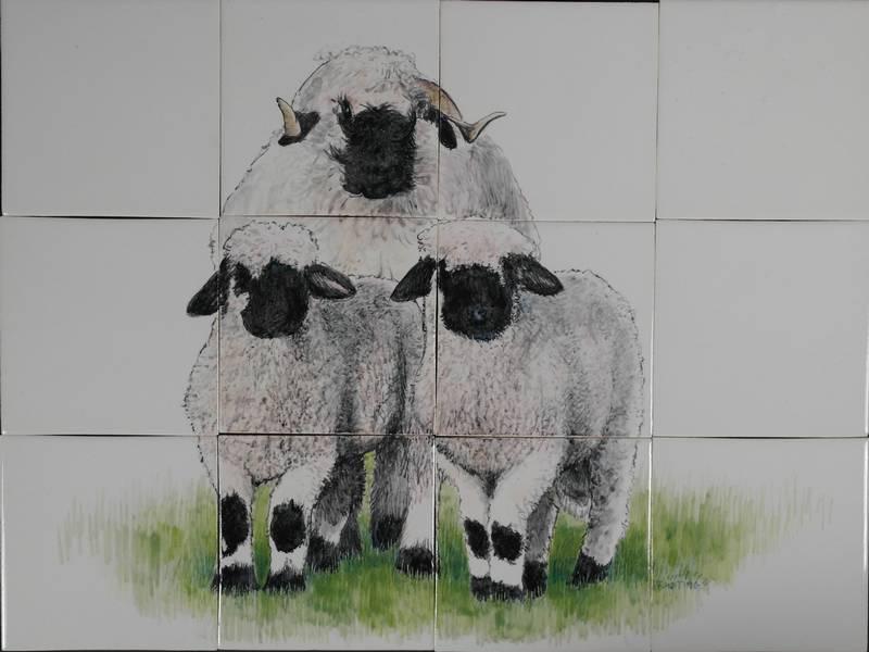 Schafe mit viel Wolle
